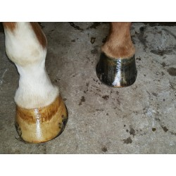 Onguent noir : hydrate la corne du cheval et protège de l'humidité
